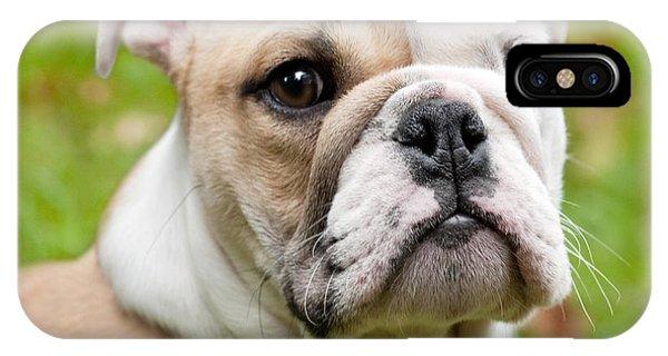 Dog iPhone X Case - English Bulldog Puppy by Natalie Kinnear