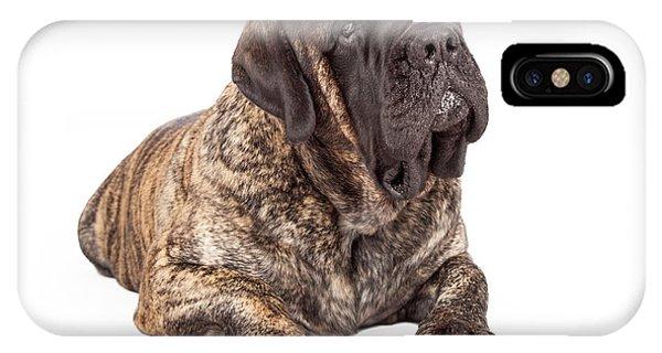 English Mastiff Dog Laying Head Tilted IPhone Case
