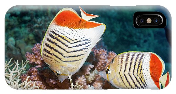 Ichthyology iPhone Case - Eritrean Butterflyfish On A Reef by Georgette Douwma