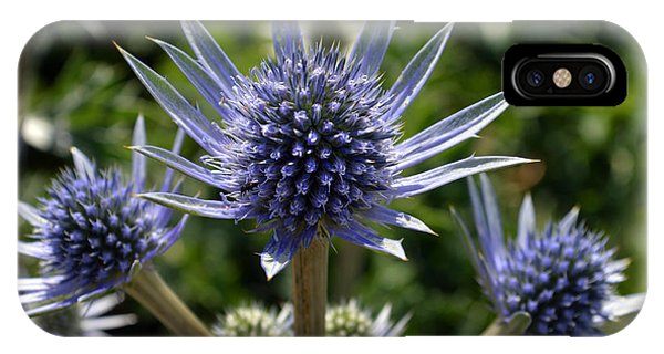 Eryngium Bourgatii. IPhone Case