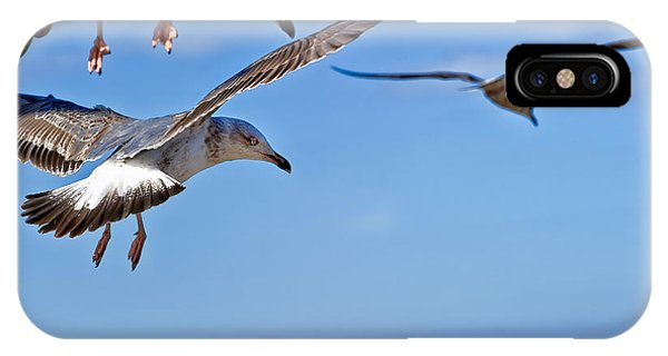 Essaouira Seagull IPhone Case