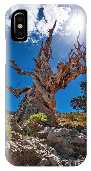 Old iPhone Case - Eternity - Dramatic View Of The Ancient Bristlecone Pine Tree With Sun Burst. by Jamie Pham