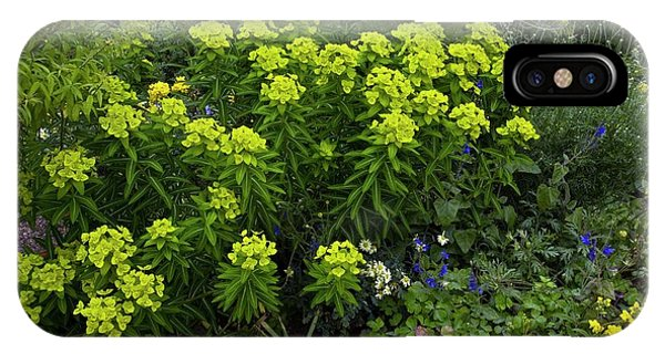 Euphorbia Flowers Phone Case by Bob Gibbons/science Photo Library