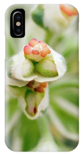 Euphorbia 'silver Swan' = 'wilcott' Phone Case by Geoff Kidd/science Photo Library