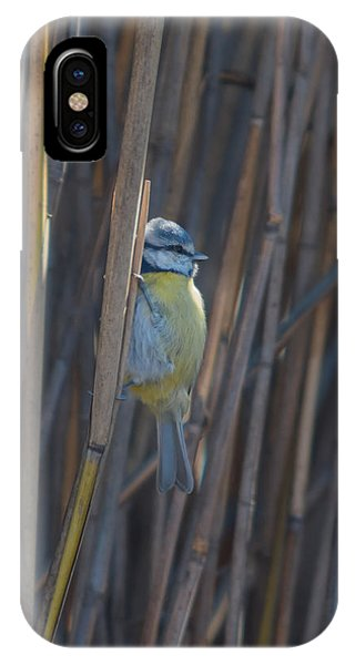 Eurasian Blue Tit - Parus Caeruleus IPhone Case