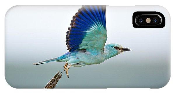 Bird iPhone Case - Eurasian Roller by Johan Swanepoel
