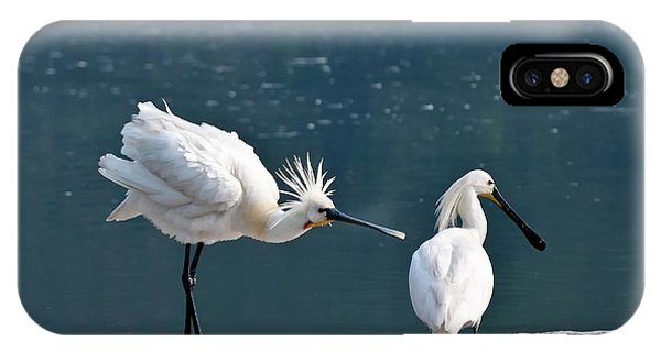 Eurasian Spoonbill Courtship Display IPhone Case