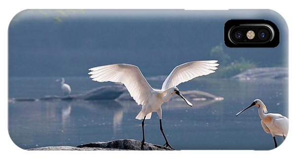 Eurasian Spoonbill Landing IPhone Case
