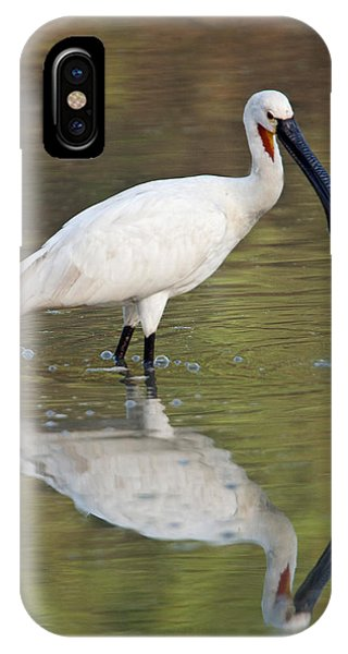 Spoonbill iPhone Case - Eurasian Spoonbill Platalea Leucorodia by Panoramic Images