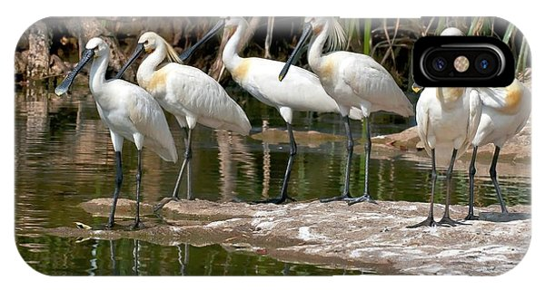 Eurasian Spoonbills At Water's Edge IPhone Case