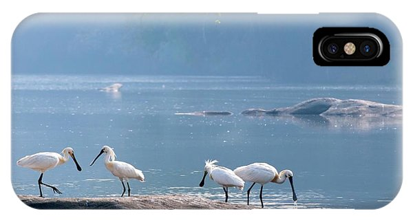 Eurasian Spoonbills Feeding IPhone Case