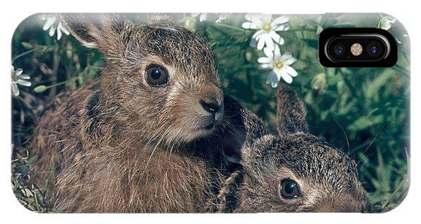 European Brown Hares IPhone Case