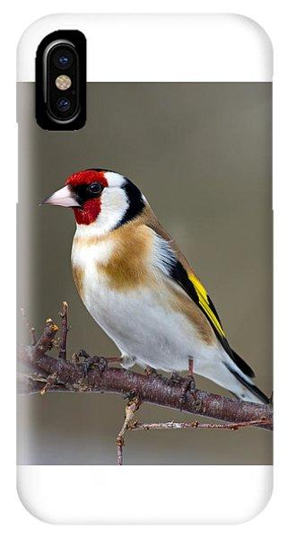 European Goldfinch  IPhone Case