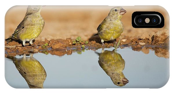 Migratory Birds iPhone Case - European Greenfinch (carduelis Chloris) by Photostock-israel