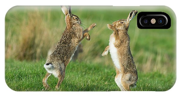 European Hares In March IPhone Case