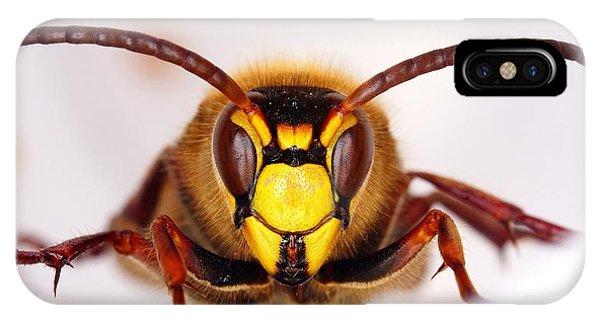 European Hornet-vespa Crabro Phone Case by Marko Lengar