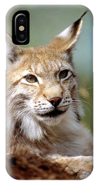 Lynx iPhone Case - European Lynx (lynx Lynx) by Louise Murray/science Photo Library