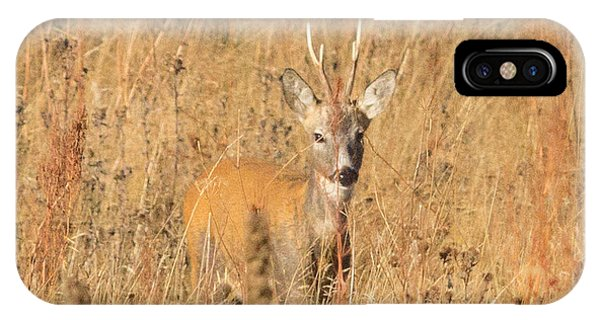 European Roe Deer IPhone Case