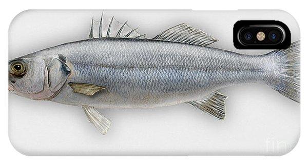 European Seabass Dicentrarchus Labrax - Bar Commun - Loup De Mer - Lubina - Havabor - Seafood Art IPhone Case