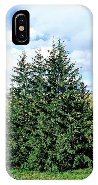 Spruce iPhone Case - European Spruce (picea Excelsa) Trees by Bruno Petriglia/science Photo Library