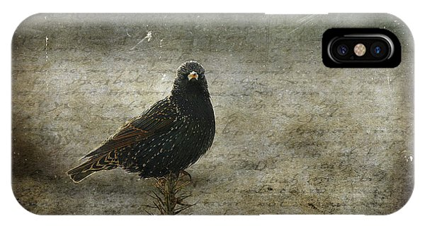Starlings iPhone Case - European Starling by Cindi Ressler