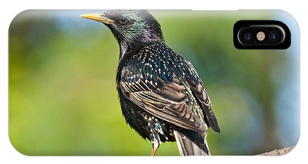 European Starling In A Tree IPhone Case