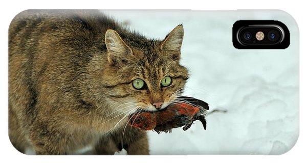 European Wildcat IPhone Case