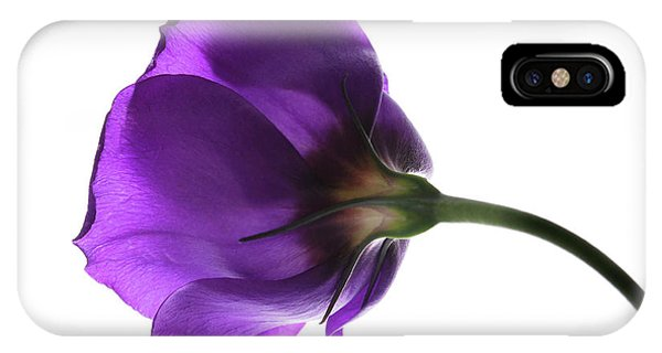 Eustoma Grandiflorum. IPhone Case