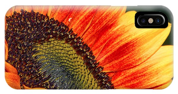 Evening Sun Sunflower IPhone Case