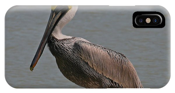 Everglades Brown Pelican IPhone Case