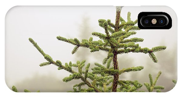 Spruce iPhone Case - Evergreen Spruce Sapling by Michael Ver Sprill