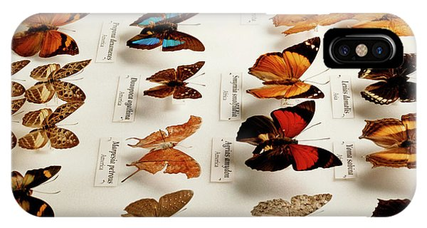 Exotic Butterfly Collection Phone Case by Mauro Fermariello/science Photo Library