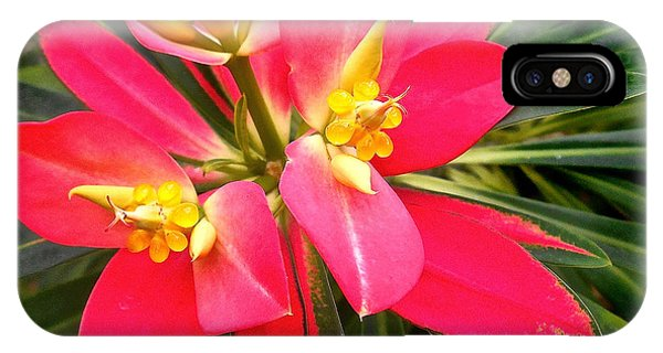 Exotic Red Flower IPhone Case