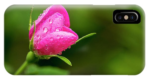 Rosebush iPhone Case - Extreme Close Up Of A Wild Rose Bud by Michael Interisano