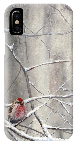 Eyeing The Feeder Alaskan Redpoll In Winter IPhone Case