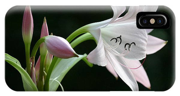 Eyelash Lily IPhone Case