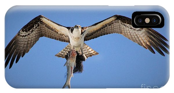 Ospreys iPhone Case - Eye's In The Sky by Quinn Sedam
