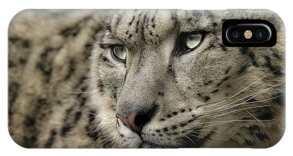Eyes Of A Snow Leopard IPhone Case