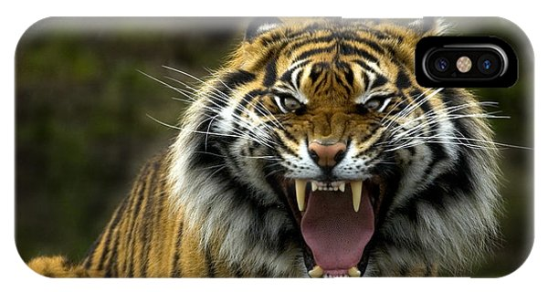 Big Cat iPhone Case - Eyes Of The Tiger by Mike  Dawson