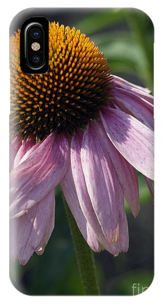 Fading Coneflower IPhone Case