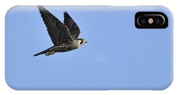 Falcon In Flight IPhone Case