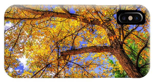 Fall Canopy 12167 IPhone Case