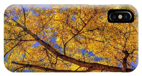 Fall Color Canopy 12161 IPhone Case