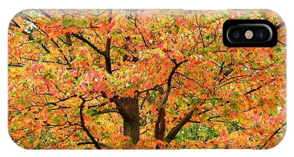 Fall Color Palette Phone Case by Judy Genovese