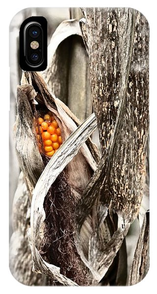 Fall Corn IPhone Case