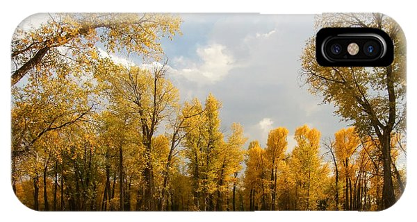 Fall Cottonwoods In Gros Ventre IPhone Case