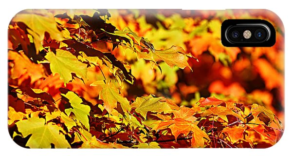 Fall Foliage Colors 13 IPhone Case