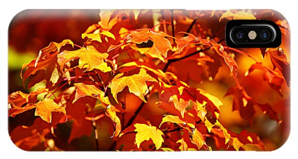 Fall Foliage Colors 14 IPhone Case