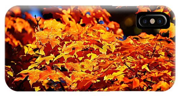 Fall Foliage Colors 16 IPhone Case