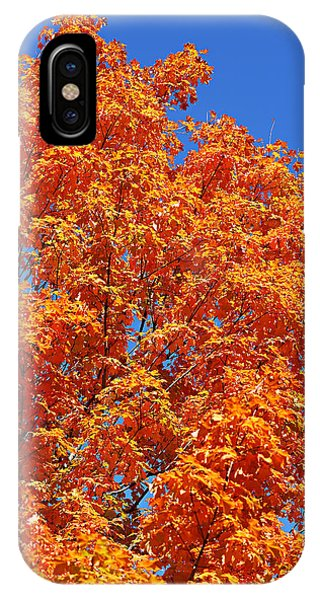 Fall Foliage Colors 18 IPhone Case